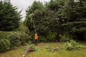 Trimming a Tall Tree