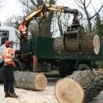 Tree trunks being cut into logs