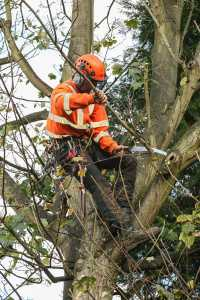 Artemis Tree Services trimming the branches of a tree