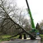 90 tonne crane lifting a tree out of the road