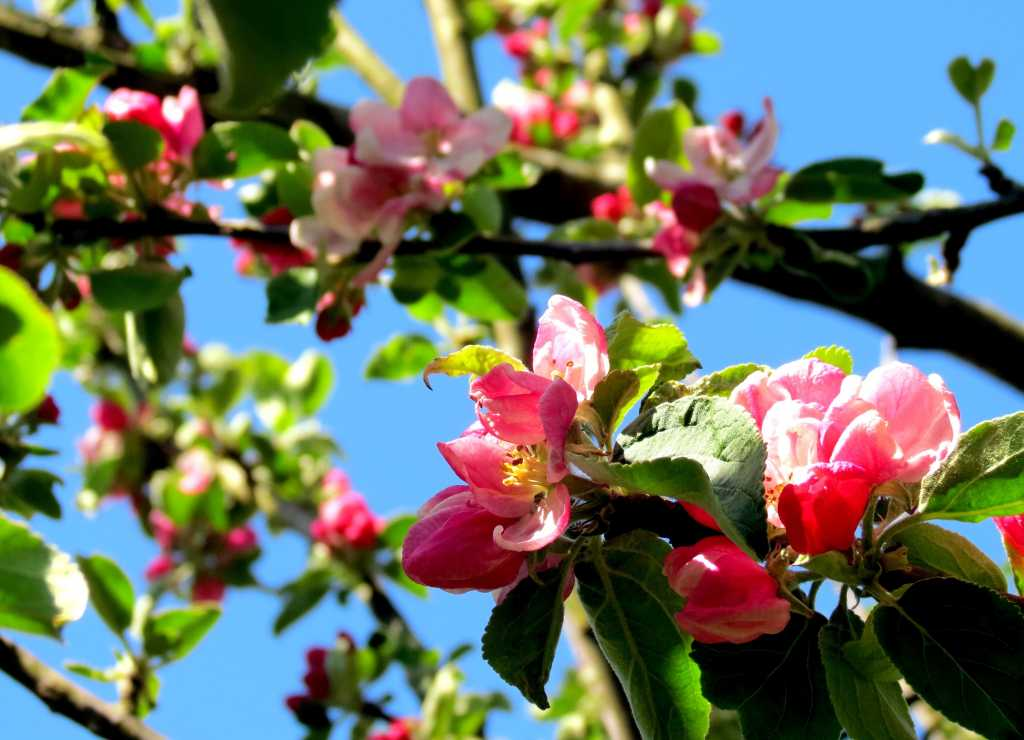 Our Top 10 Spring Tree Care Tips
