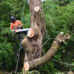 Cutting a Tree Down
