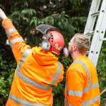 Tree Reports from Artemis Tree Services