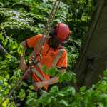 Tree Maintenance Services from Artemis Tree Services