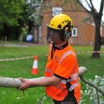 Tree removal by tree surgeon at Artemis Tree Services